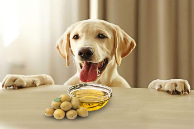 Aceitunas para perros